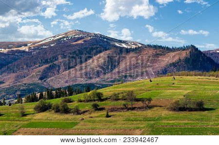 Rural Fields On A Grassy Hillside In Springtime. Mountain With Snowy Tops In The Distance Of Beautif
