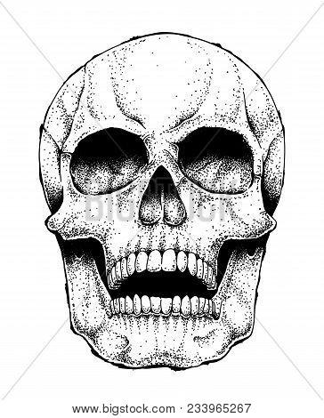 Hand Drawn Vector Human Skull Isolated On White. Monochrome Dead Head Illustration.