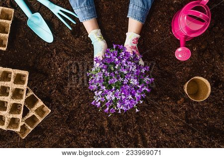 Planting A Plant With Gardening Tools On Fertile Soil Texture Background Seen From Above, Top View.