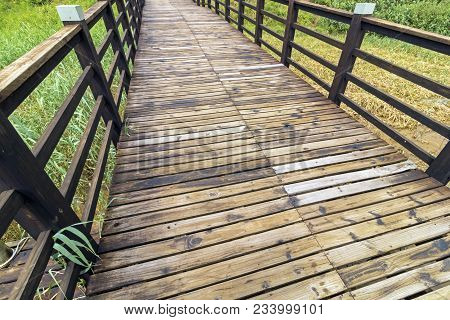 Close up wooden boardwalk with pattern and textures leading through green wetland vegetation at St Lucia Estuary in Zululand, KwaZulu Natal, South Africa poster