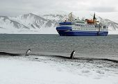 penguins watching a tourist ship in antarctica. poster