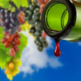 Bottle With Drop Of Wine On Grape Bunches Background