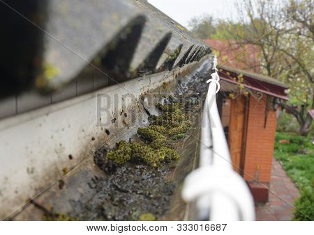 Close Up On Dirt In House Roof Gutter. Asbestos Roof Gutter Cleaning.