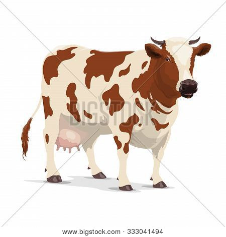 Cow Animal Vector Design Of Milk Or Cattle Farm. Heifer, Bovine Mammal With Brown Spots, Star On Hea