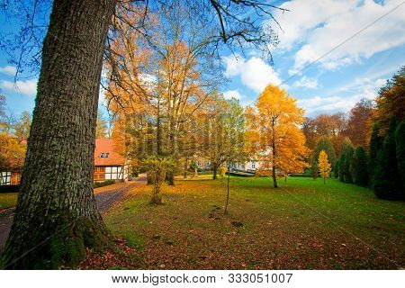 Autumn In The Park. Nature And Fall Season.