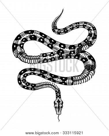 Half-skeleton Of A Milk Snake In Vintage Style. Serpent Cobra Or Python Or Poisonous Viper. Engraved