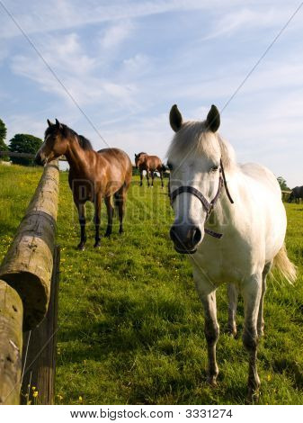 poster of Horse in Beautiful Green Field in British Summer Morning