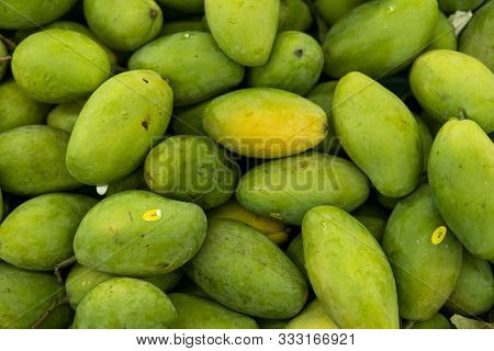 Texture Of Green Juicy Fresh Mango Fruit. Group Of Fresh Green Mango For Sell .thai Fruit Tropical R