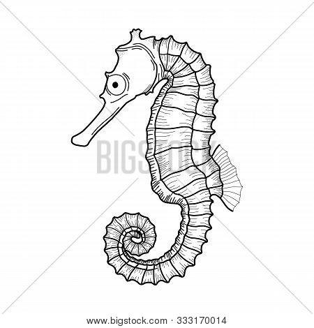 Seahorse Sea Underwater. Vector Illustration Of An Abstract Ornamental Sea Horse. Illustration Of Se
