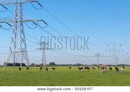 Power Pylons And Cows