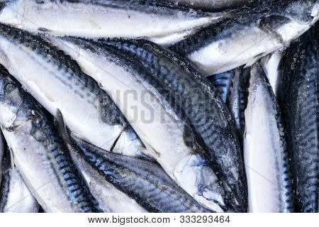 Frozen Mackerel. Frozen Group Of Fish. Iced Athlantic Fish. Mackerel. Mackerel Pattern. Mackerel Tex