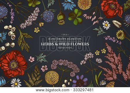 Floral Design On Dark Background With Shepherds Purse, Heather, Fern, Wild Garlic, Clover, Globethis