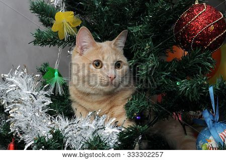 Red Cat On The Christmas Tree Among Christmas Toys And Decorations. Happy New Year.