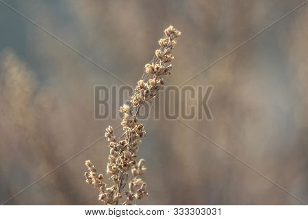 Dry Frosted Autumn Time Plant With Spiderweb On Sunny Morning