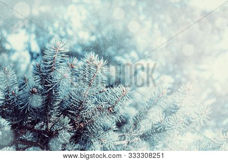 Christmas winter snowy background with fir tree branches. Christmas card. Blue pine tree branches under winter falling snow, closeup of Christmas winter forest nature with free space for Christmas text
