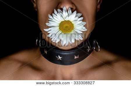 Adult Man In A Black Leather Collar With A Daisy Flower In His Mouth On A Black Background