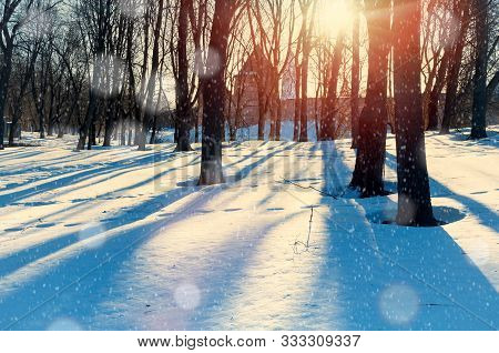 Winter landscape with snowy winter trees and snowfall in the winter park. City winter landscape scene, winter snowy sunset park in warm tones