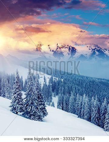 Attractive winter landscape and covered snow trees. Dramatic wintry scene. Carpathian, Ukraine, Europe. Happy New Year! Image of breathtaking scenery, nature wallpapers. Discover the beauty of earth.