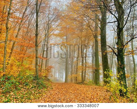 Green, yellow and orange leaves on trees in autumn season