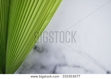Fiji Fan Palm,leave Of Fiji Fan Palm Tree,fiji Fan Palm And Green Background,pritchardia Pacifica On