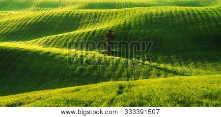 Picturesque Hilly Field. Agricultural Field. Deauty Landscape