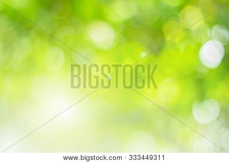 Natural Spring Blurred Green Leaves Background. Create Light Soft Blurred Colors In Bright Sunshine.
