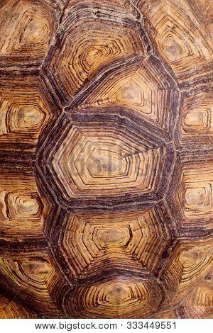 Blurred Pattern Of Tortoise Shell. Cropped Shot Of Tortoise Shell. Blurred Abstract Nature Backgroun