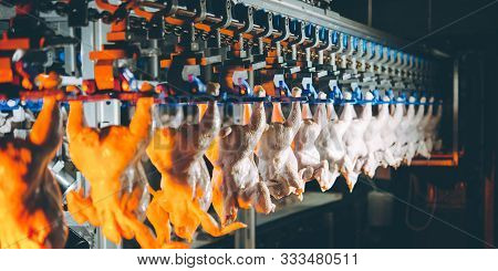 Bird Chicken Factory Line Hang Poultry Industry