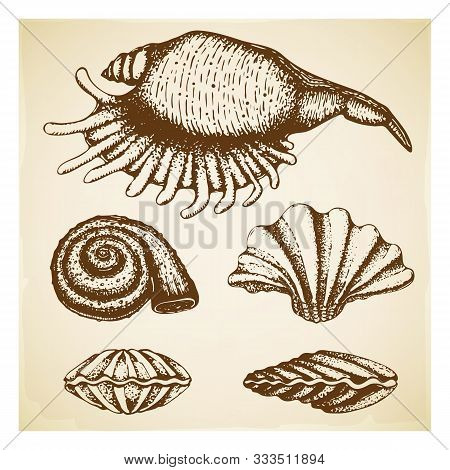 Vintage Hand Drawn Seashell Collection. Set Of Various Beautiful Engraved Mollusk Marine Shells On R