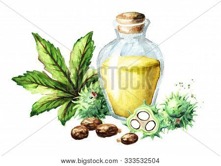 Castor Oil Bottle With Green Castor Fruits, Beans, Leaf And Seeds. Watercolor Hand Drawn Illustratio
