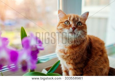 Ginger Cat Sitting In Carton Box On Window Sill At Home. Pet Relaxing By Plants