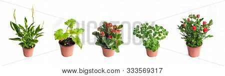 Collection Set Of Houseplants In Flower Pots Isolated On White Background
