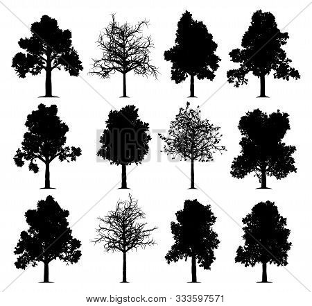 Oak Trees Silhouettes Isolated On White Background. Collection Of 12 Oak Trees. Eps File Available.