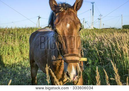 A Horse Is Walking In The Field.