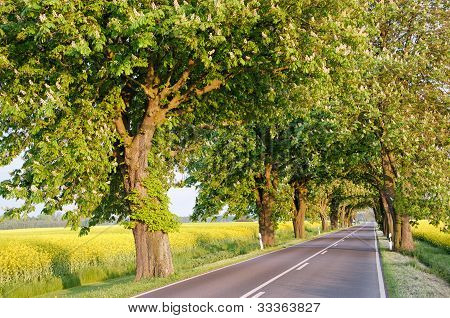 Roads Of Germany