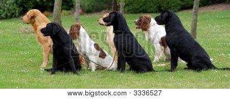 Alert Dogs