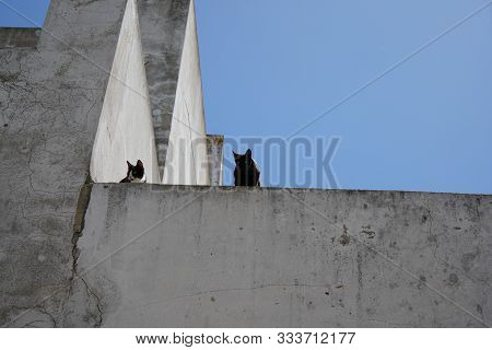 Wild cats are predominantly feral domestic cats in the Southern European countries and mostly European shorthair poster