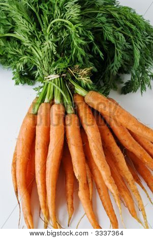 A Bunch Of Carrots From The Garden