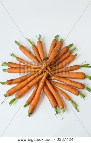 A Display Of Carrots From The Garden