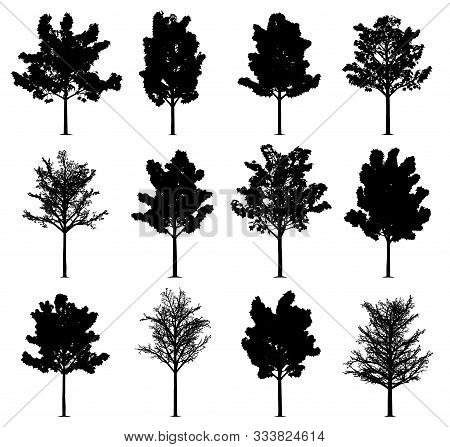 Maple Tree Silhouettes Isolated On White Background. Collection Of 12 Maple Trees. Eps File Availabl