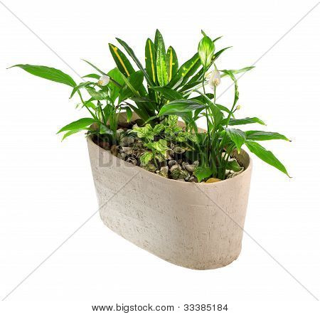 indoor plant in a pot
