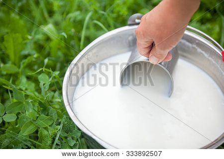 Scooping Fresh Foaming Milk From The Bucket With Metal Mug. Pail With Milk. Dairy Farm. Milk Farm.