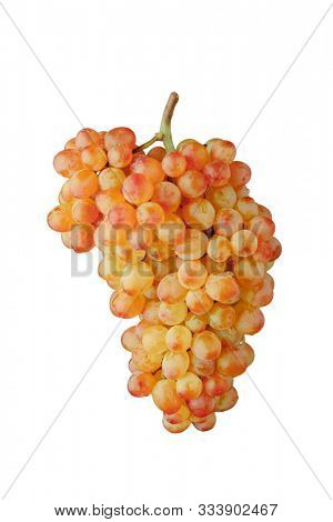 pink and green muscat grapes vine, isolated on white background
