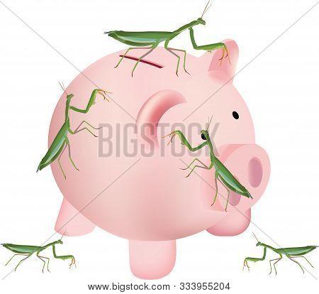 Insect Invertebrate Mantis Religiosa Above Saving Piggy Bank