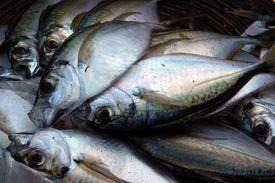 Fish, Market