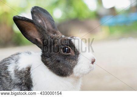 Pet Rabbit Raised In The Garden. Looking To Explore The Area Around Him