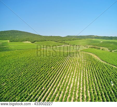 Mountain Vineyard daylight. Narure composition.