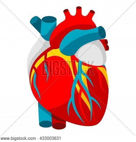 Illustration Of Human Heart. Object For Medicine And Health.