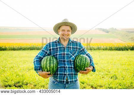Cheerful Farmer Man Holds Two Watermelons In His Arms On A Sunny Summer Day. Male Farmer With Hat Lo