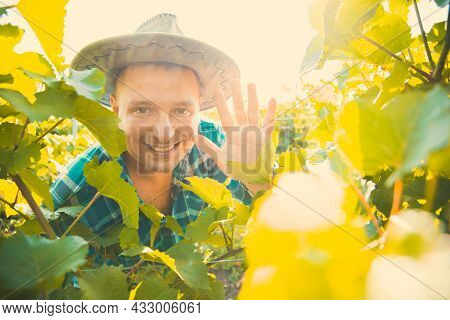 Portrait Winning Farmer Man On A Sunny Summer Day, Looks At The Camera And Smiles Among The Vine Lea